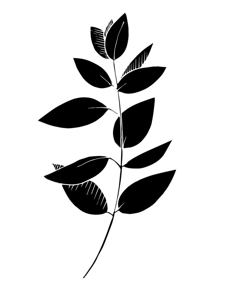 Black Eucalyptus Leaves clipart