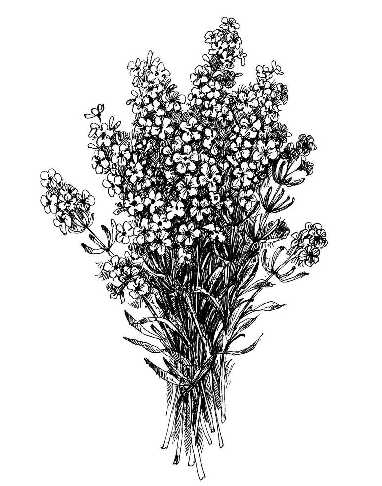 Bouquet Lavender Clipart Black and White