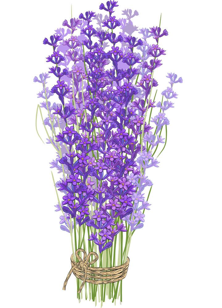 Bouquet of Lavender clipart