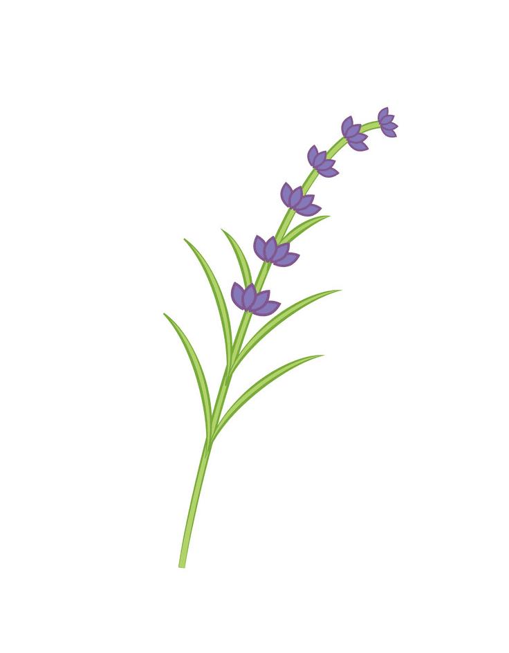 Branch Lavender clipart