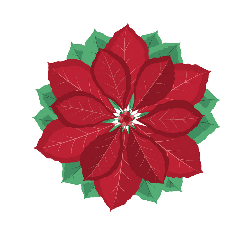 Clipart Poinsettia png