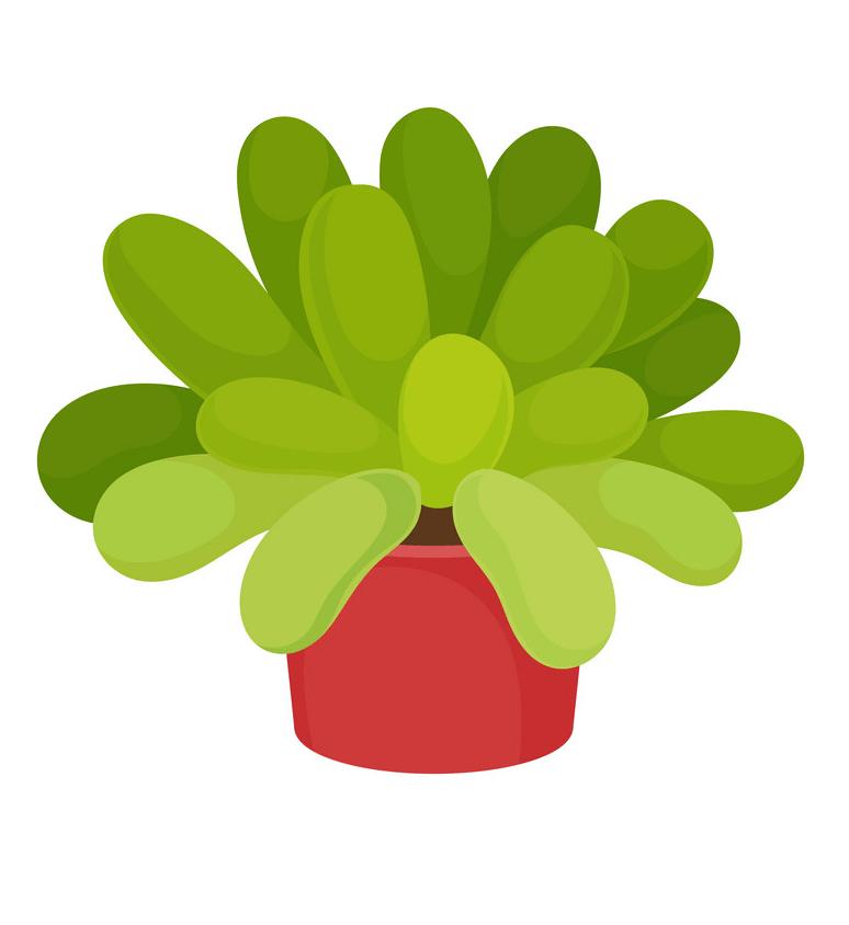 Cute Succulent clipart