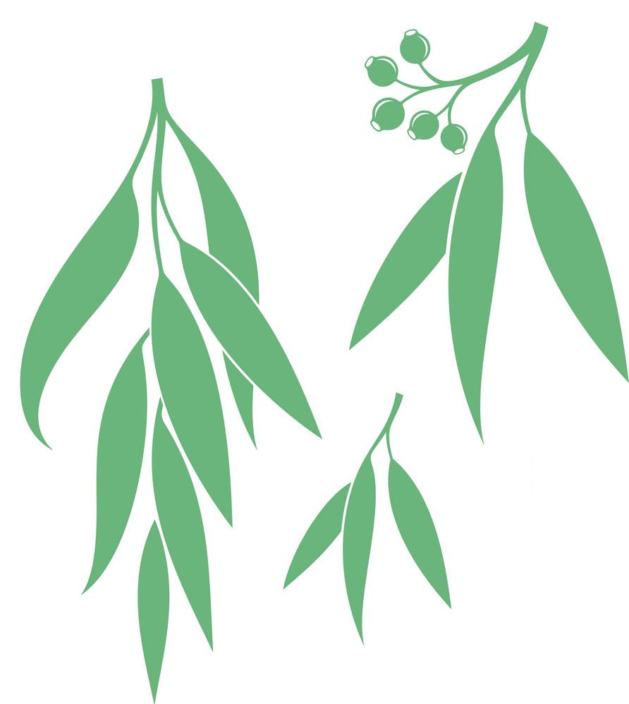 Eucalyptus Leaves clipart 3