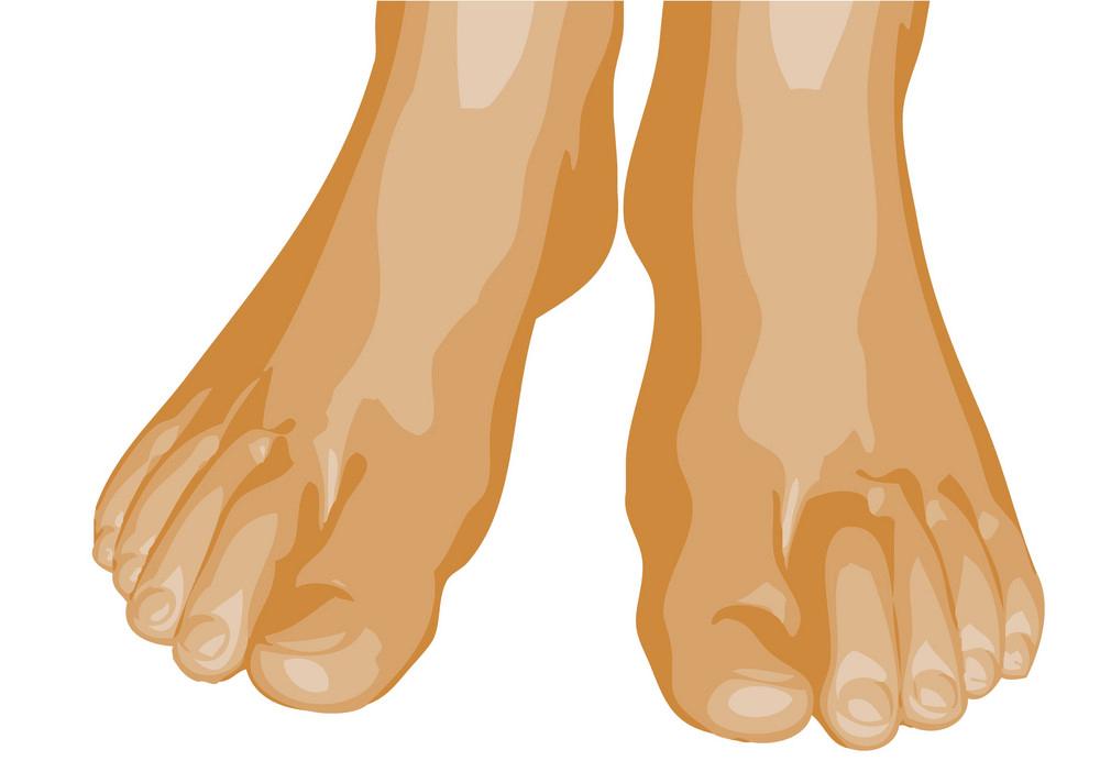 Feet clipart transparent