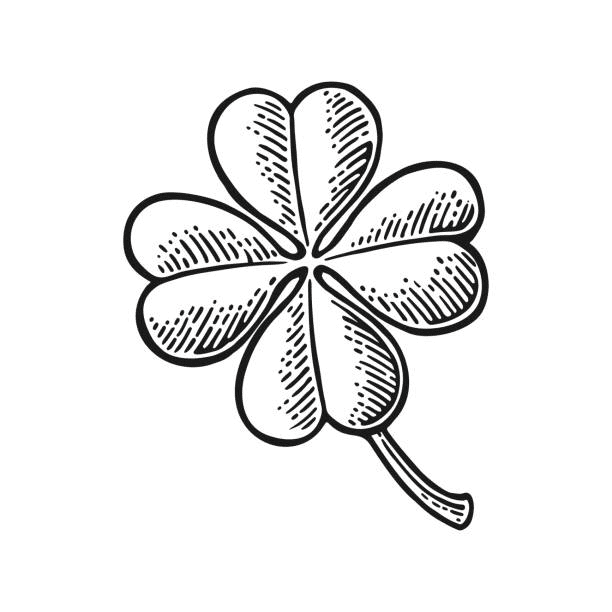 Four Leaf Clover Clipart Black and White 1