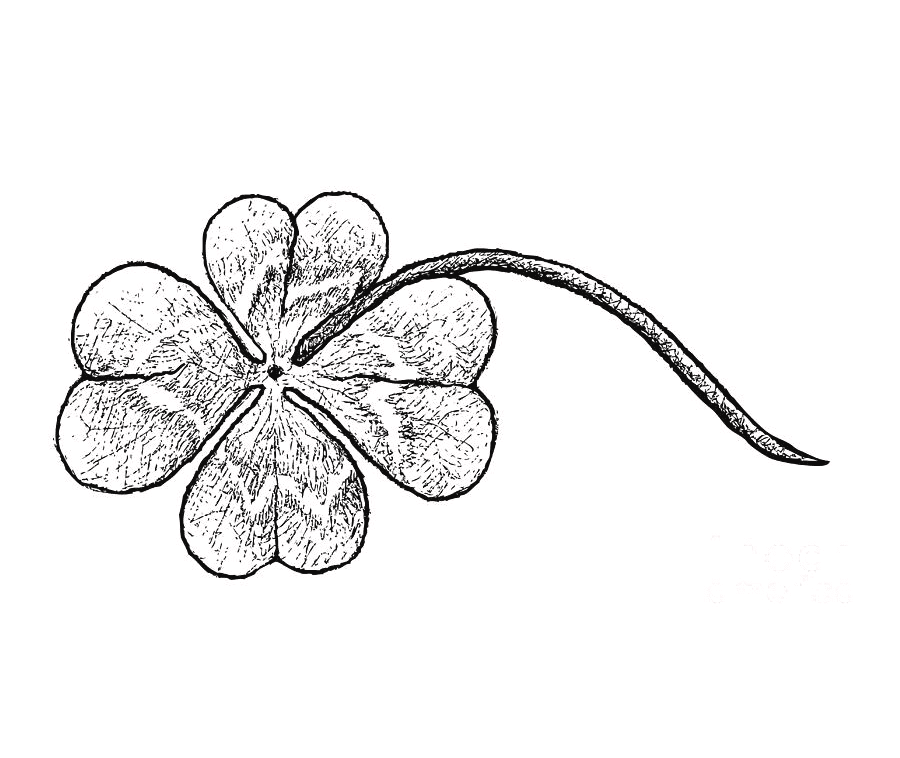 Four Leaf Clover Clipart Black and White 2