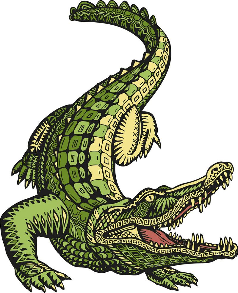 Free Alligator clipart 3