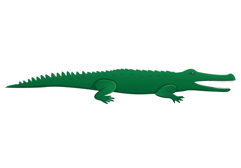 Free Alligator clipart 4