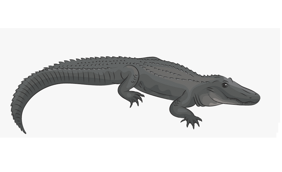 Free Alligator clipart png