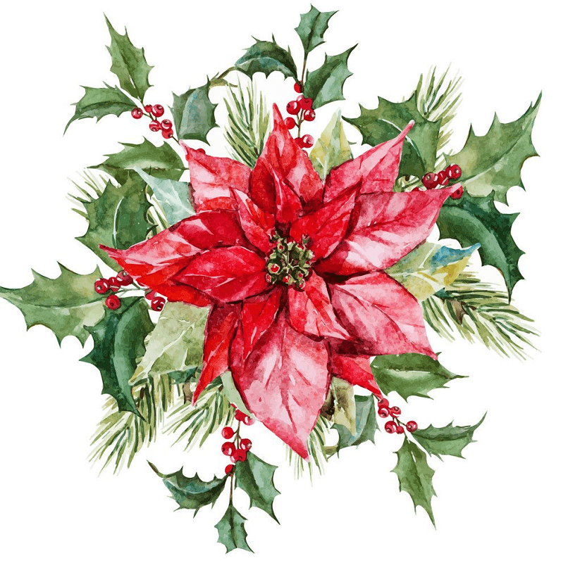 Free Clipart Poinsettia png