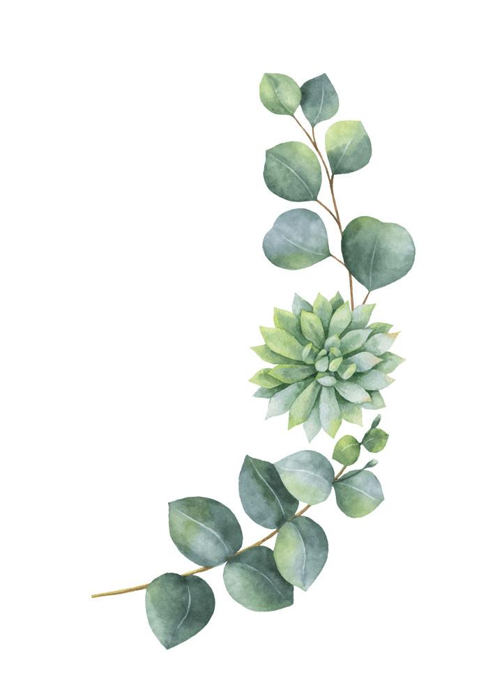 Free Eucalyptus clipart png