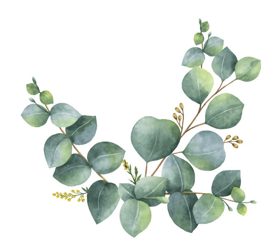 Free Eucalyptus clipart