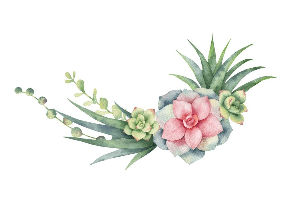 Free Watercolor Succulent clipart