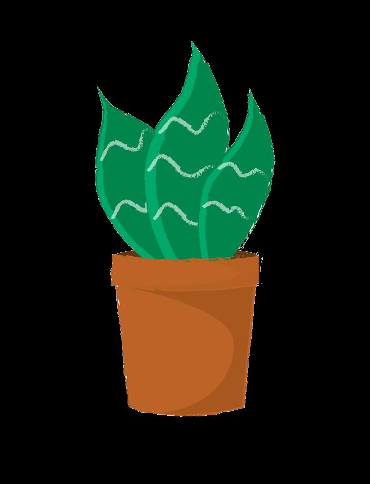 Gree Succulent clipart transparent