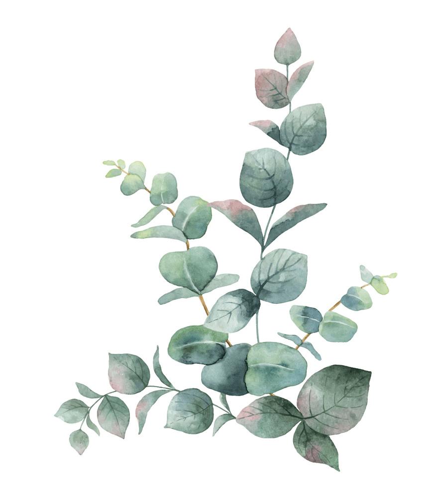 Green Eucalyptus clipart free