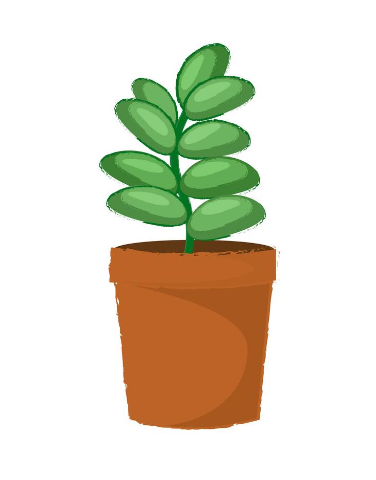 Green Succulent clipart