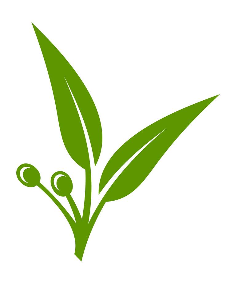 Icon Eucalyptus Leaves clipart
