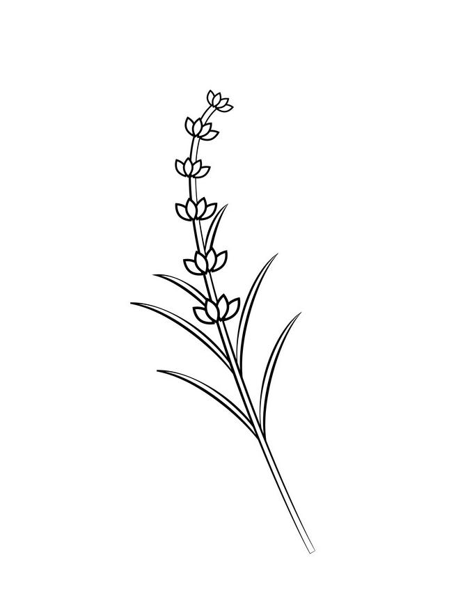 Lavender Clipart Black and White 1