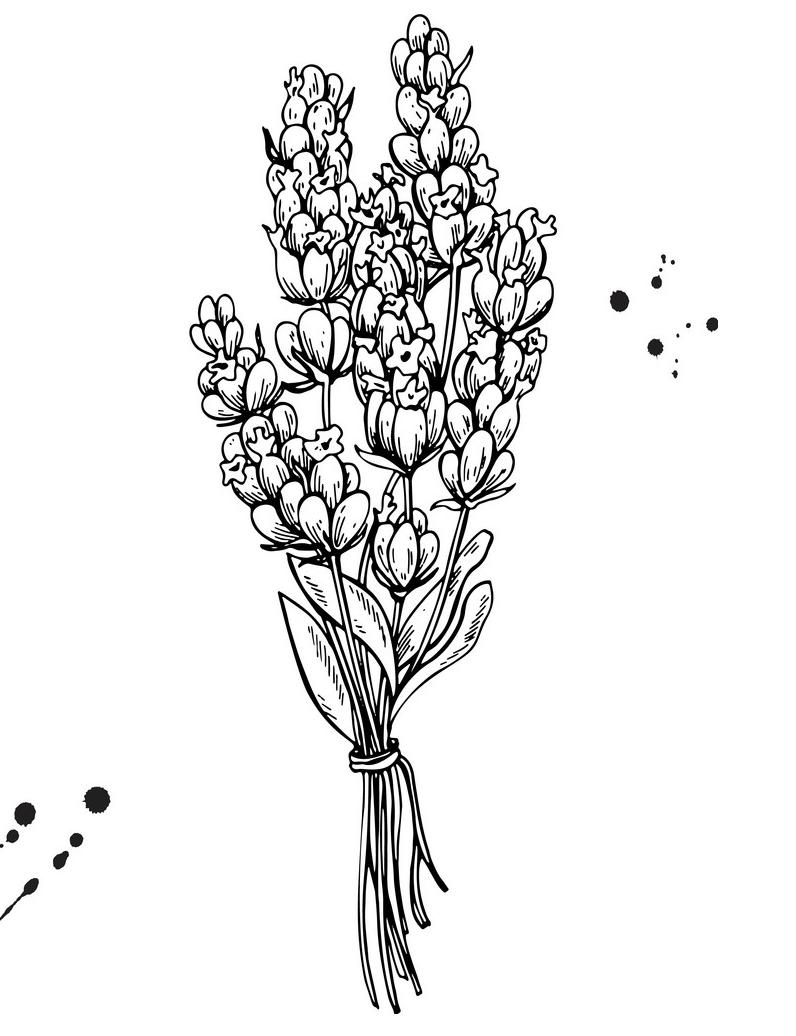 Lavender Clipart Black and White 2