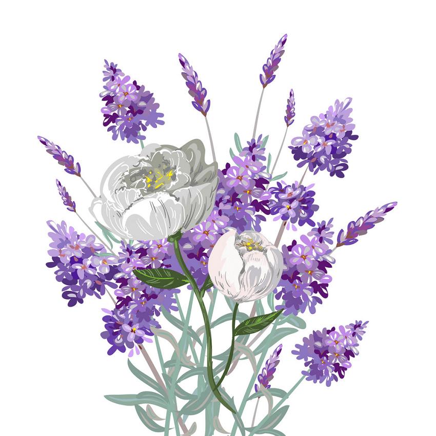 Lavender Sprig clipart