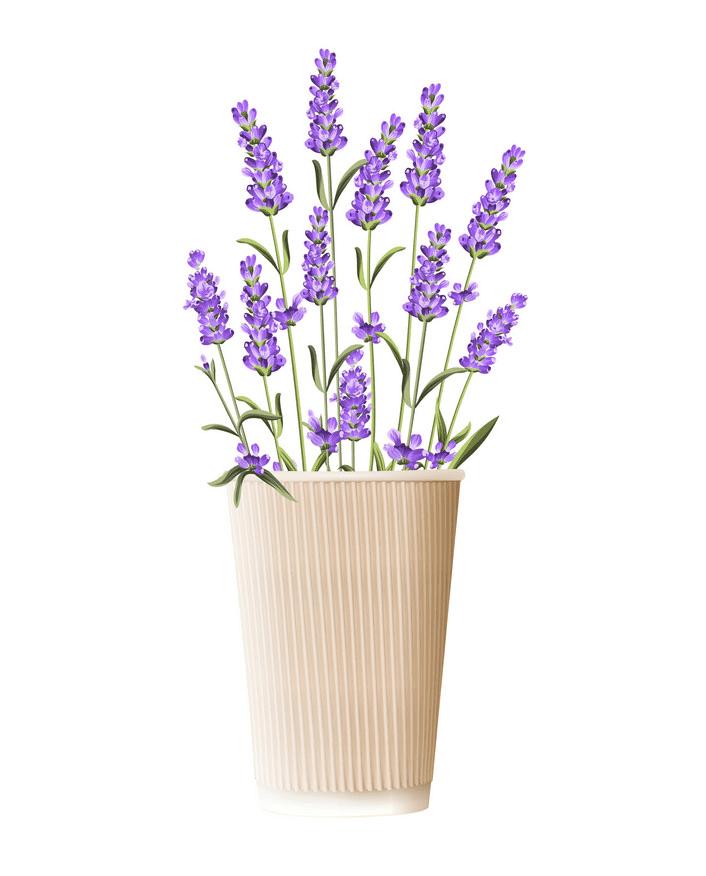Lavender clipart 2