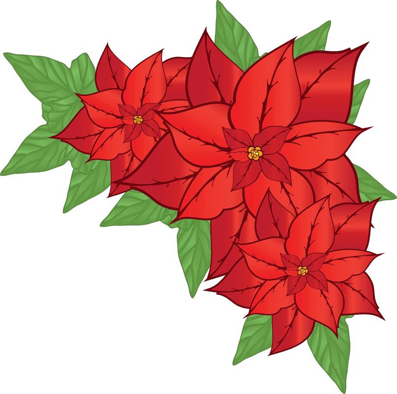 Poinsettia Flower clipart 1
