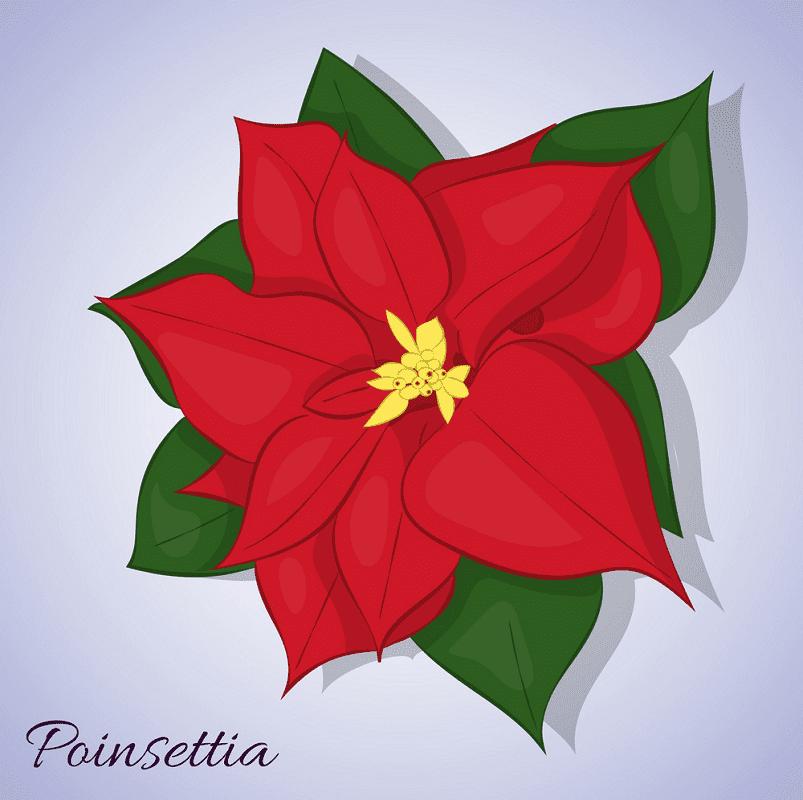 Poinsettia Flower clipart 4