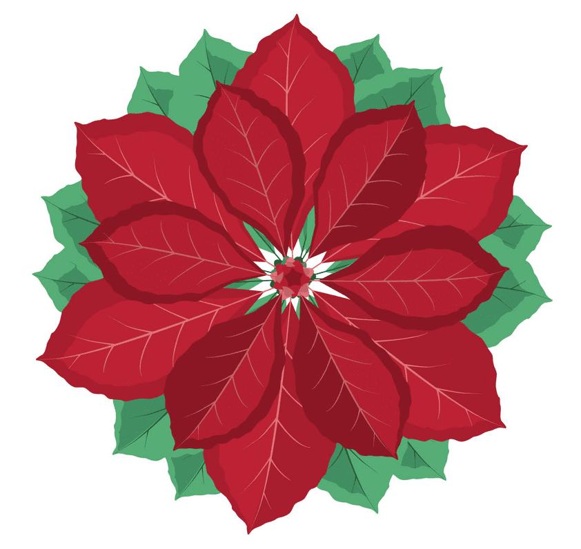 Poinsettia Flower clipart