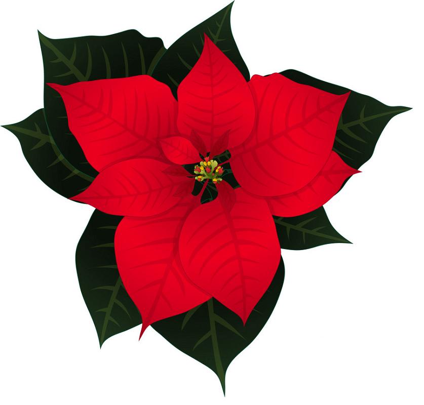 Poinsettia clipart 2