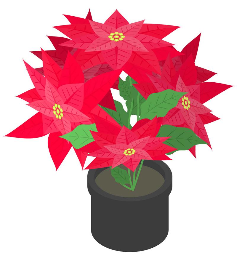 Poinsettia clipart 5