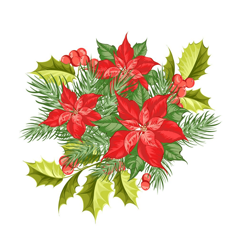 Poinsettia clipart 6