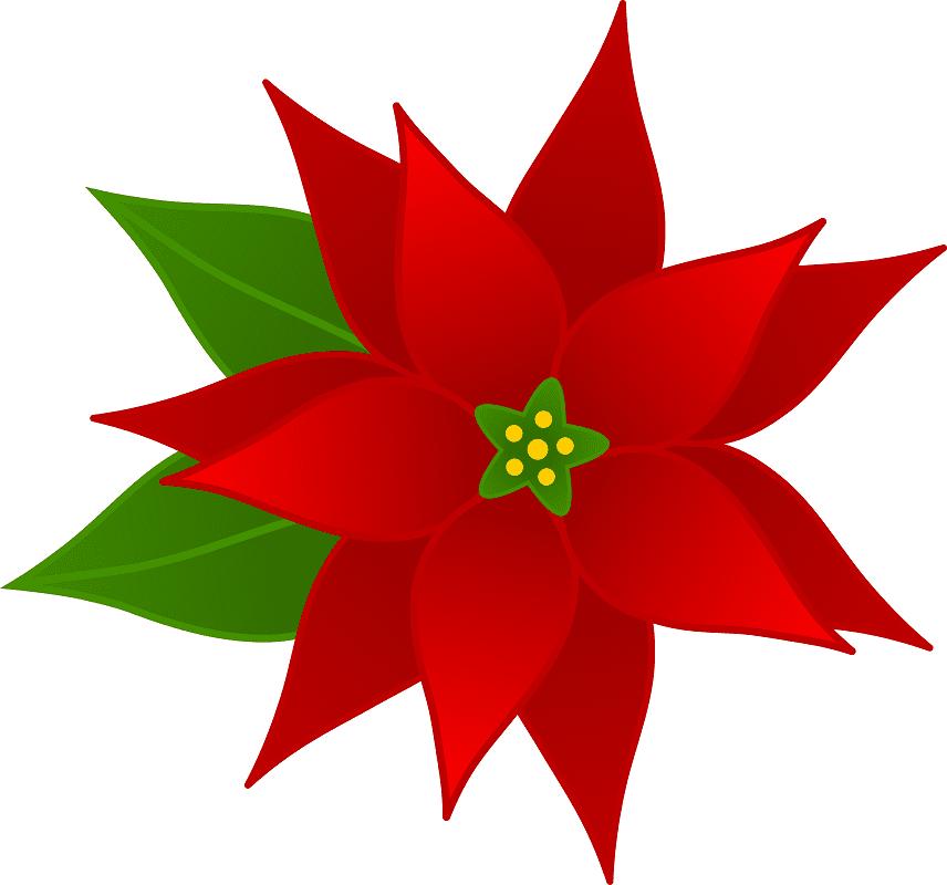 Poinsettia clipart 7