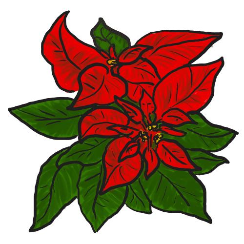 Poinsettia clipart 8