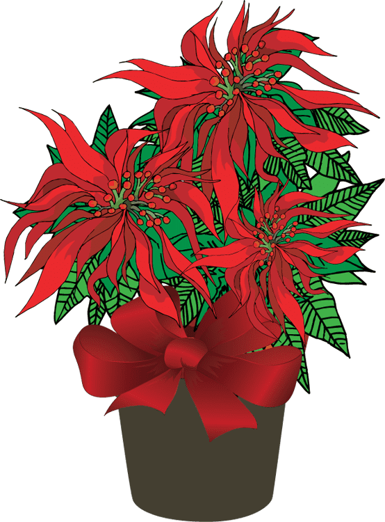 Poinsettia clipart 9
