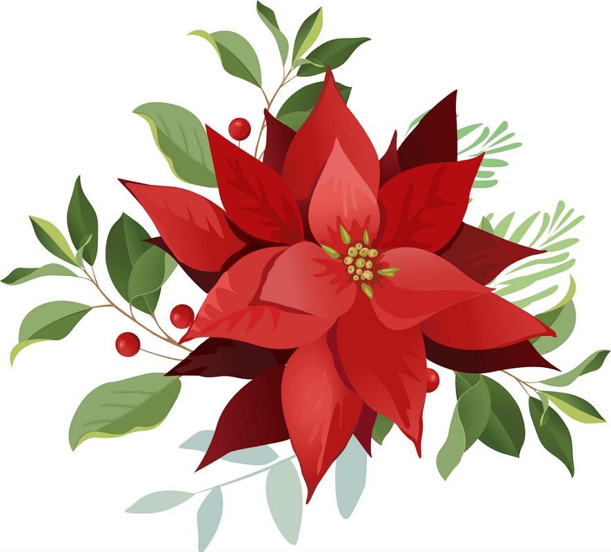 Poinsettia clipart free