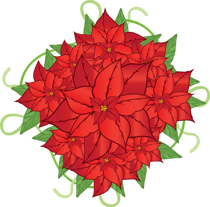 Poinsettia clipart png