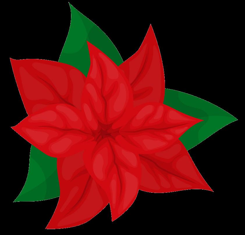 Poinsettia clipart transparent 1