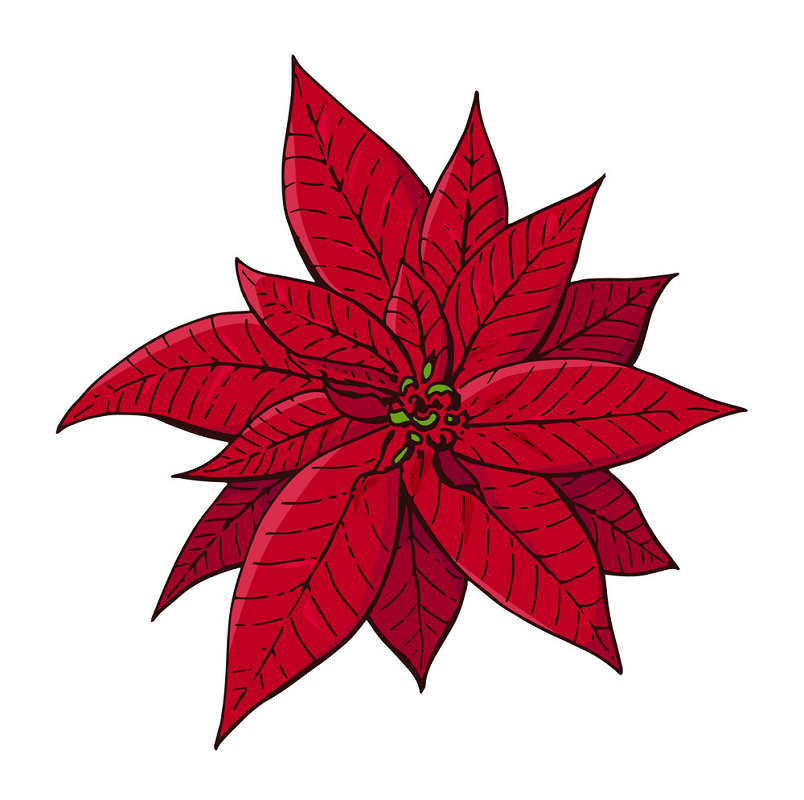 Red Poinsettia clipart