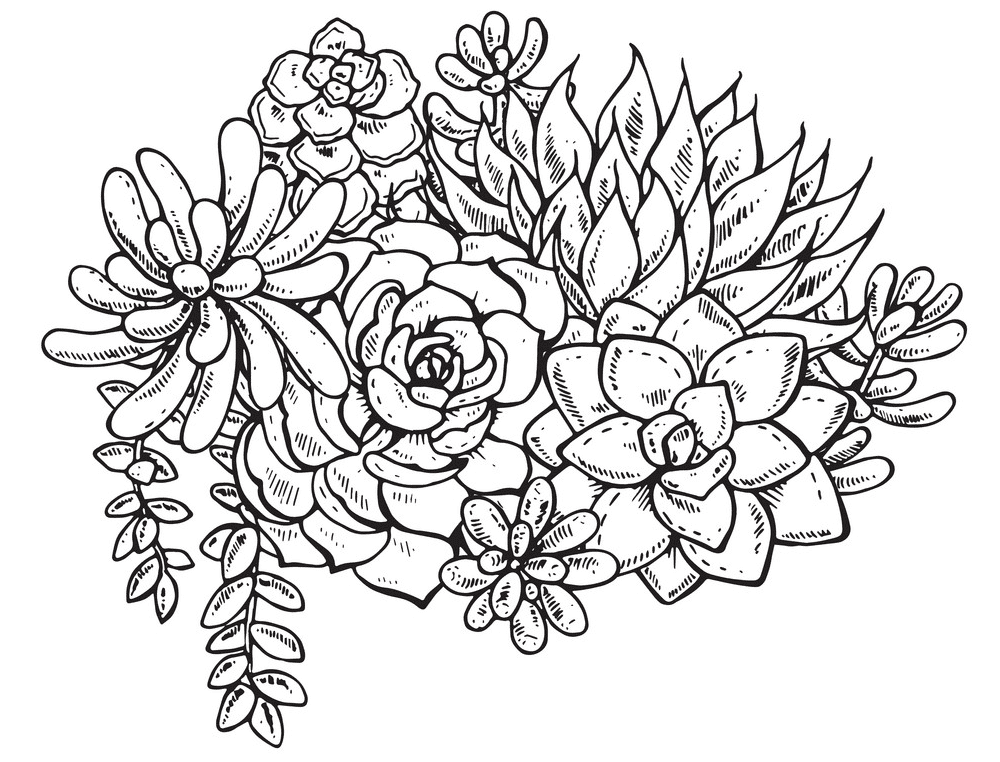 Succulent Clipart Black and White 2