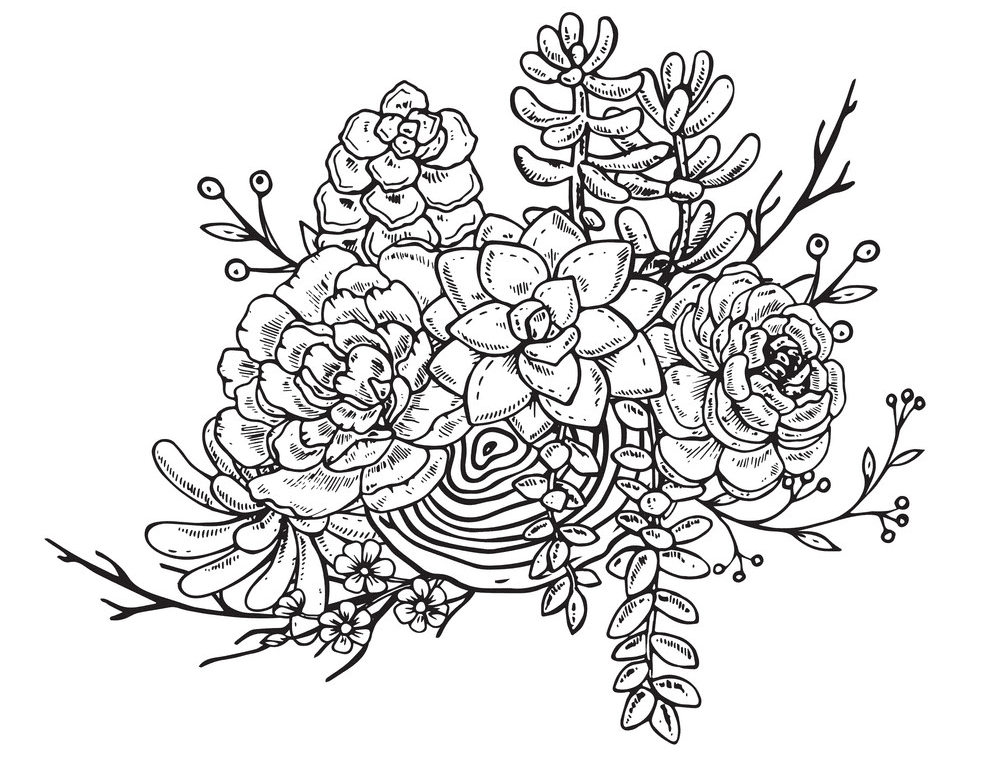 Succulent Clipart Black and White 3