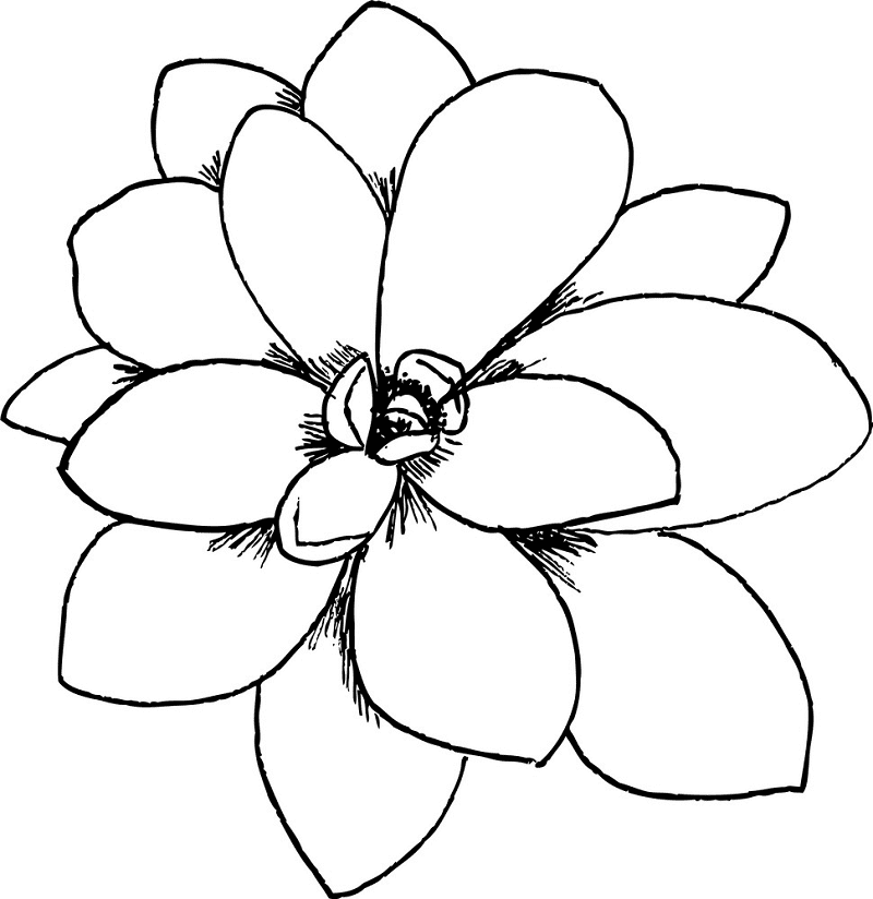 Succulent Clipart Black and White 5
