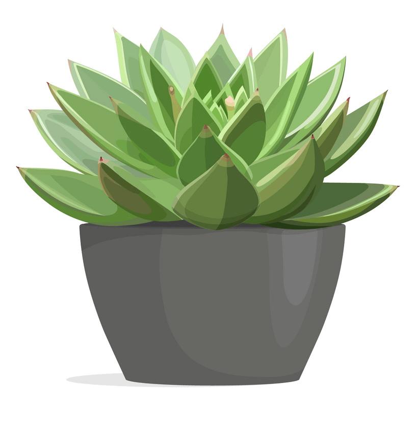 Succulent clipart free