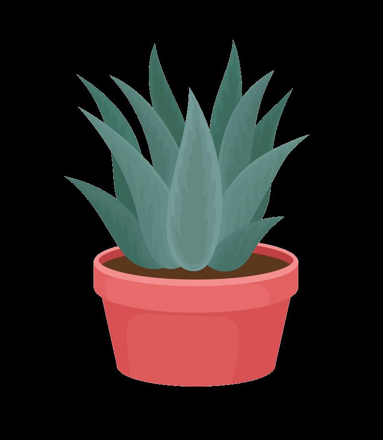 Succulent clipart transparent 1