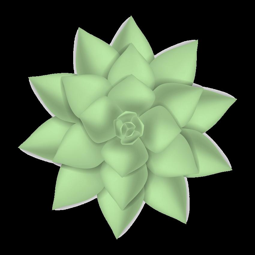 Succulent clipart transparent 3