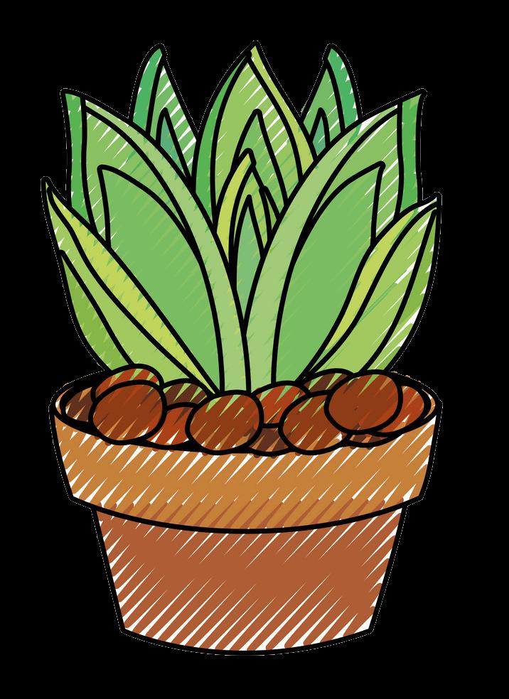 Succulent clipart transparent