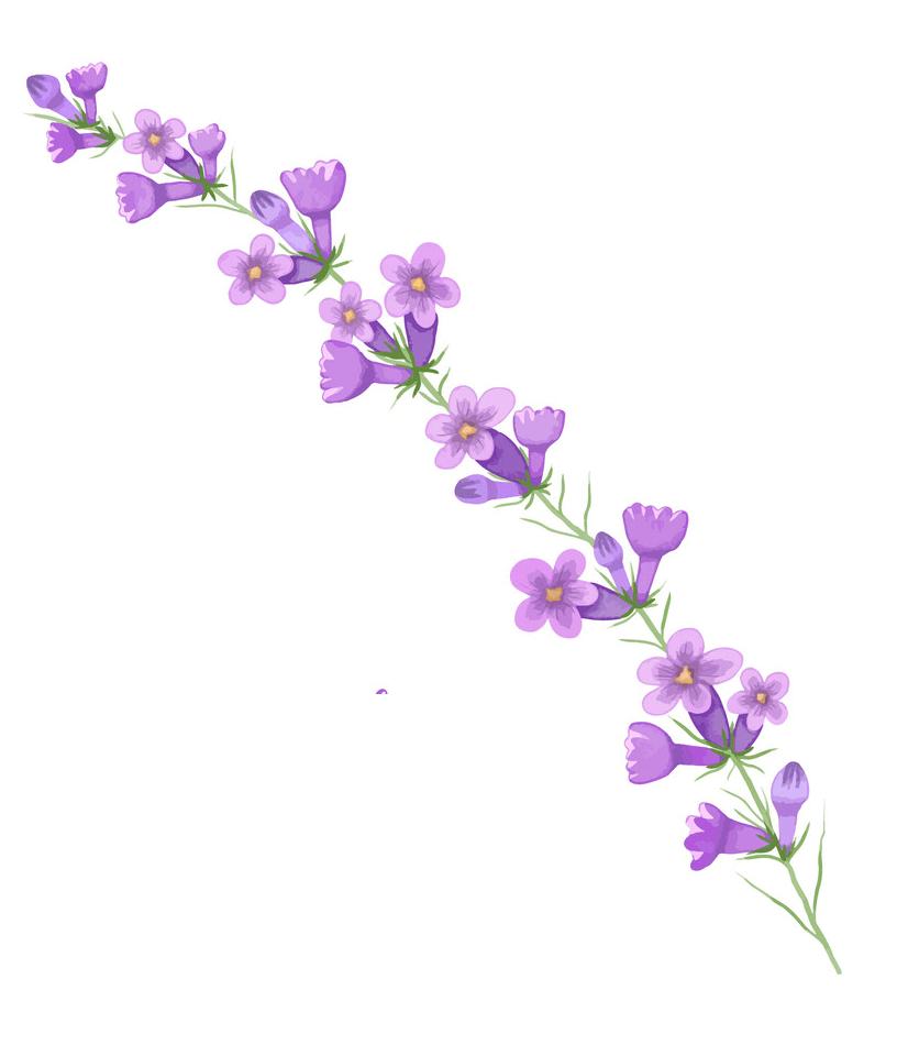Watercolor Branch Lavender clipart
