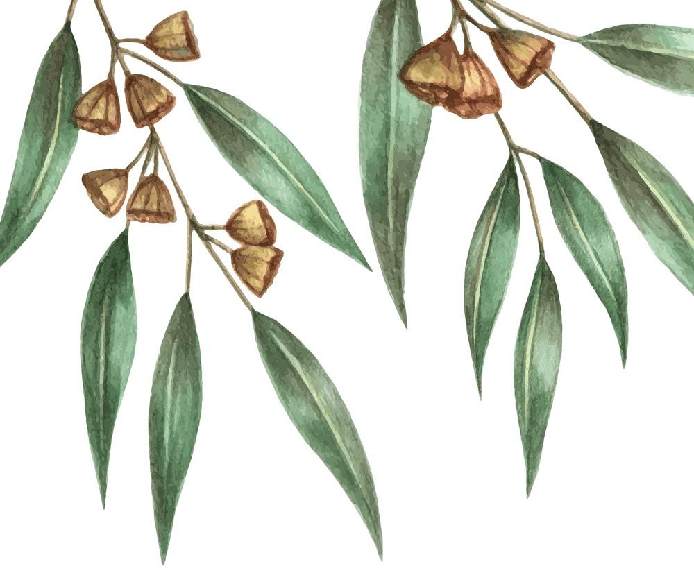 Watercolor Eucalyptus Leaves clipart