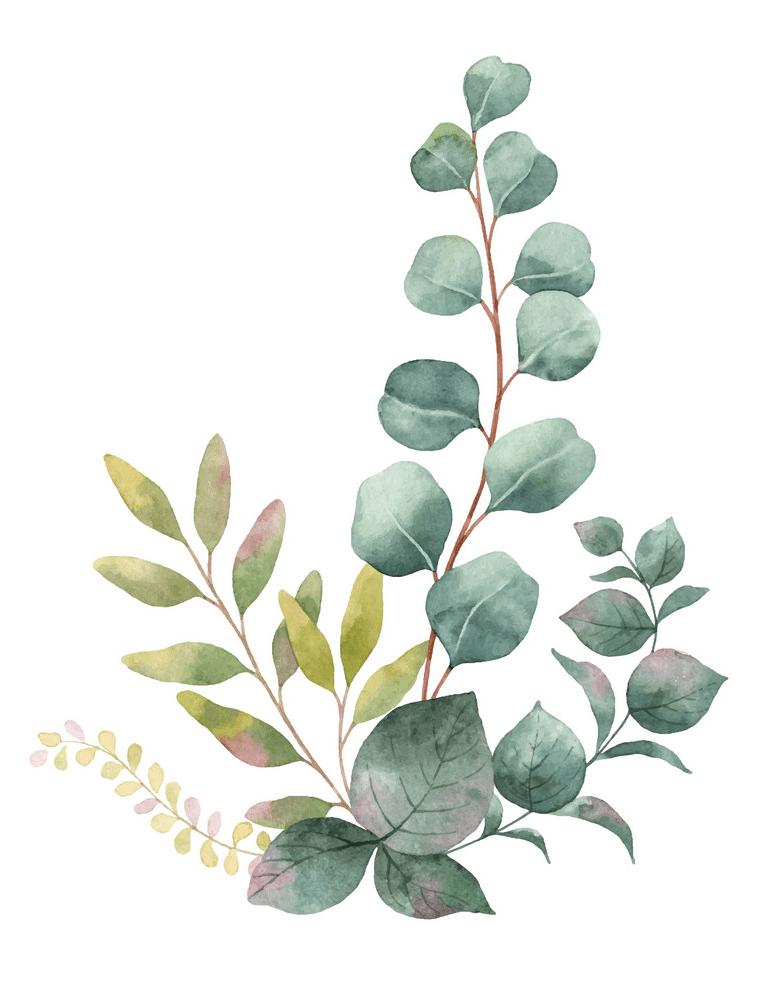 Watercolor Eucalyptus clipart 2