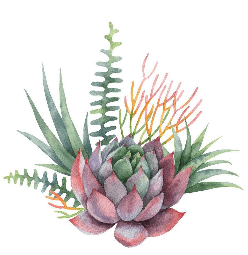 Watercolor Succulent clipart 1