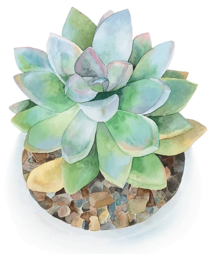 Watercolor Succulent clipart 3